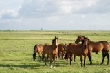 Horses and Rhinos Linked to Newly-Discovered Ancestor