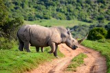 Africa Had a Record 1,020 Rhinos Poached in 2014