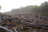 Deforestation Threatens the Planet