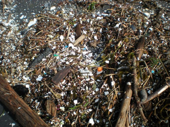 Ocean Plastics May Pose Greater Threat Than Can Be Seen