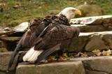 Philadelphia Eagles In Danger