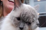 World's Oldest Cat With Two Faces Has Died at Age 15