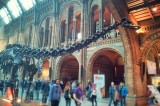 Dinosaur Long Neck Uncovered in China