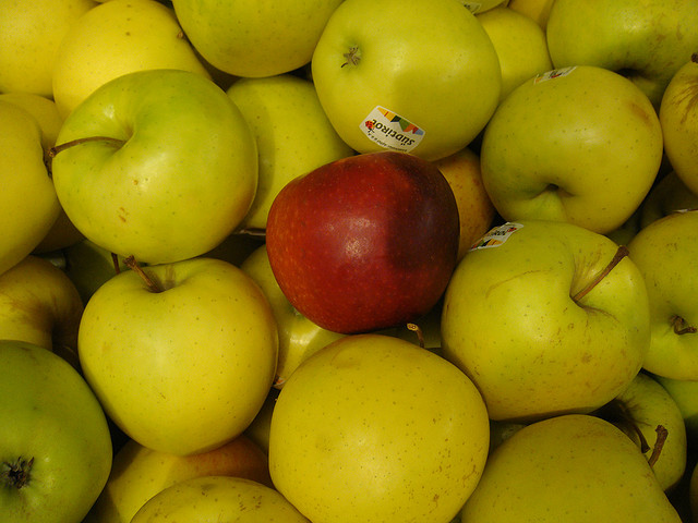 GMO Apple Resists Browning