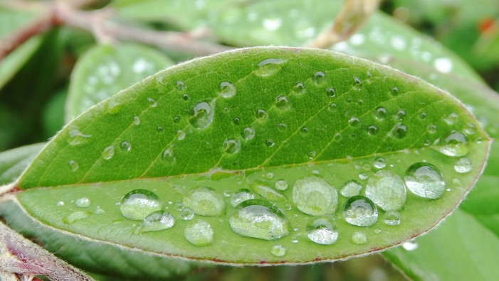 Solar Energy Turned Into Liquid Fuel by Bionic Leaf