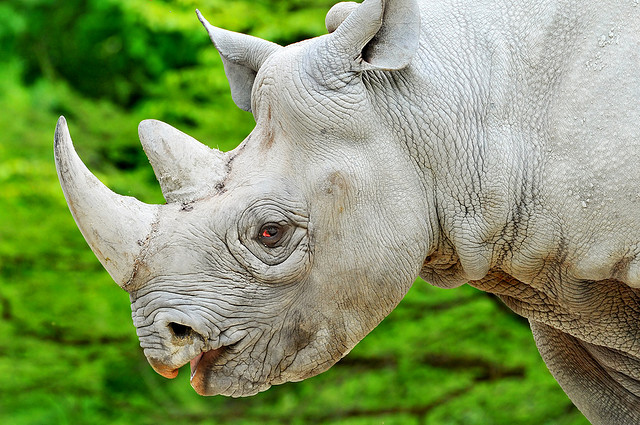 The Frozen Zoo to Resurrect Extinct Animals