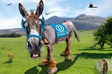 Democrats Look for Presidential Candidate