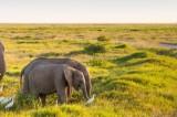 Kenya Safari: A Magical Adventure With the Big Five