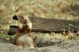 Flagstaff Confirms Fleas Carrying Plague