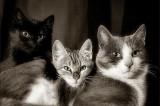Boston Teen Accused of Mutilating Cats