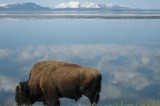 Wyoming Law Stirs Controversy Among Environmentalists