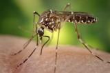 West Nile Virus Season Has Researchers on the Alert