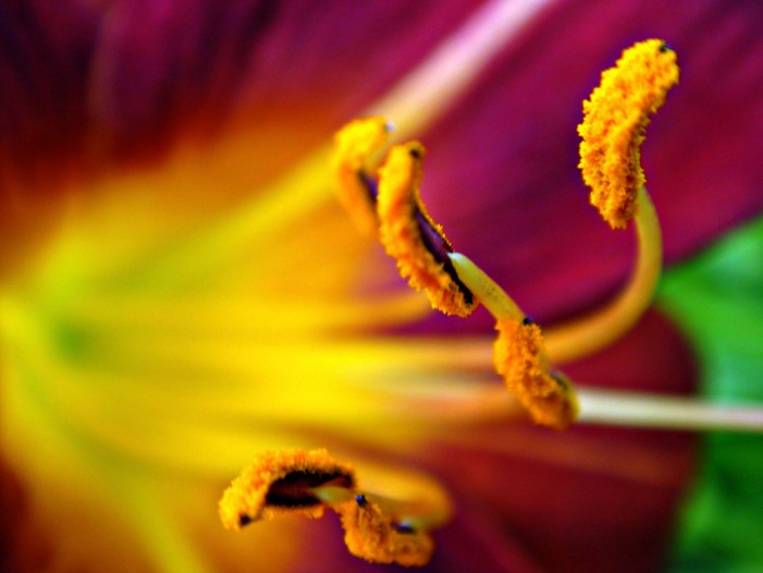 Allergy Alert: Pollen Everywhere