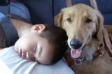 Seizure Sniffing Dogs Improve Quality of Life for Children