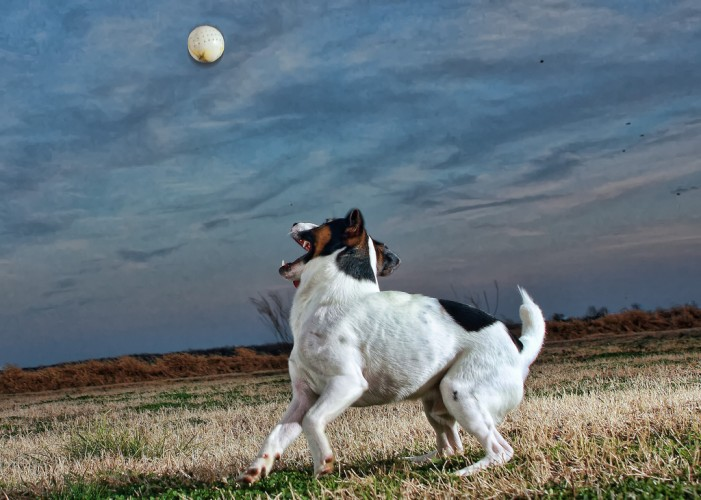 Blind Jack Russell Terrier Has Guide Dog of Its Own