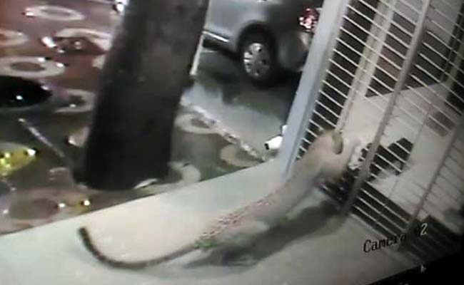 Dog Fends Off a Prowling Leopard From Owner's House [Video]