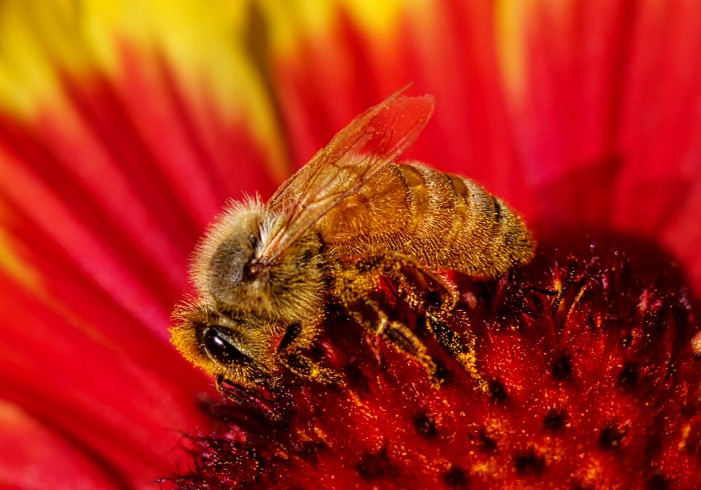 Bees Showing Signs of Alzheimer's Disease, Aluminum Is to Blame [Video]