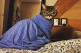 Wide-Eyed Alien Cat Matilda Goes Viral on Instagram