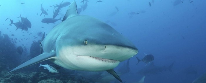 Shark Attacks Terrorizing the Carolinas
