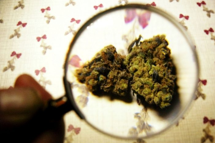 Marijuana Offers Chronic Pain Sufferers Solace