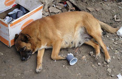 Pregnant Dog Breastfed Abandoned Toddler to Keep Him Alive