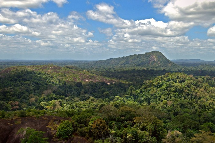 Amazon Rainforest Is a Global Concern