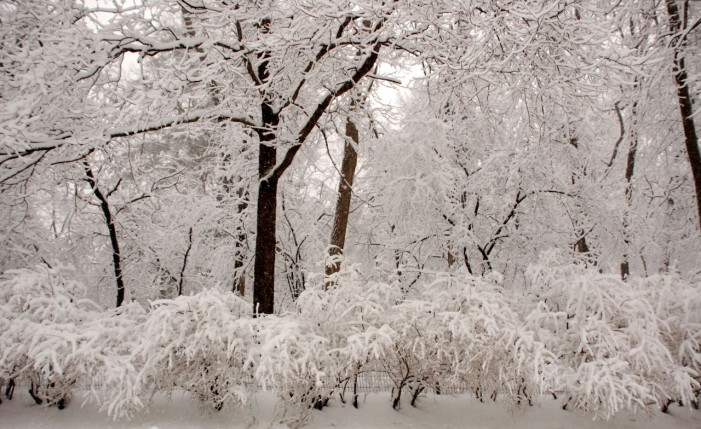 Snow Increase as System Develops
