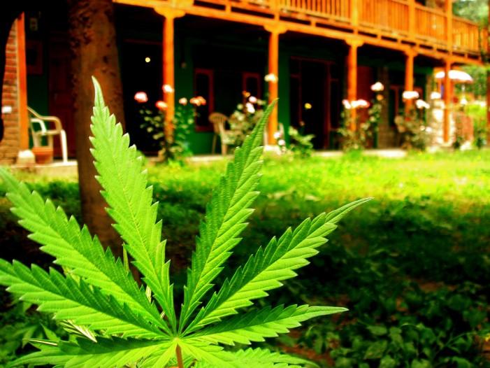 Marijuana: The Rise of the Jolly Green Giant