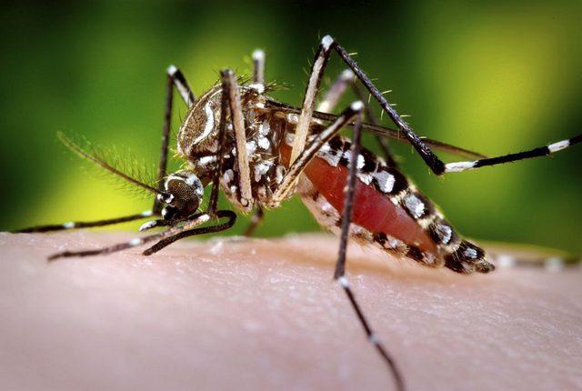 Zika Virus Rapidly Spreading