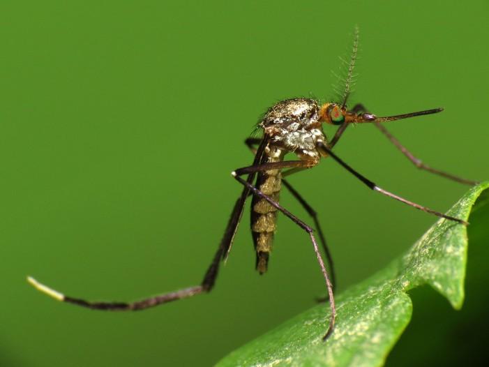 Zika Birth Defects Confirmed