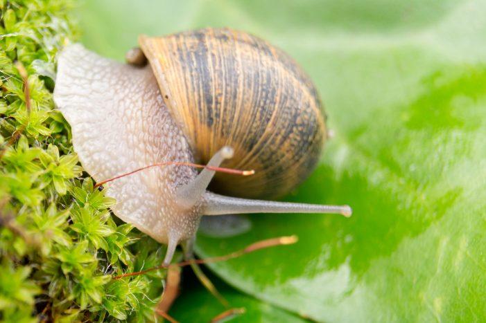 Snail Mucin Skin Care Trend