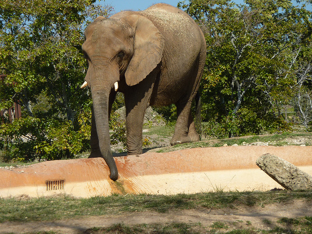 Cita the Elephant Dies at Zoo Miami After Confrontation at 51 Years Old