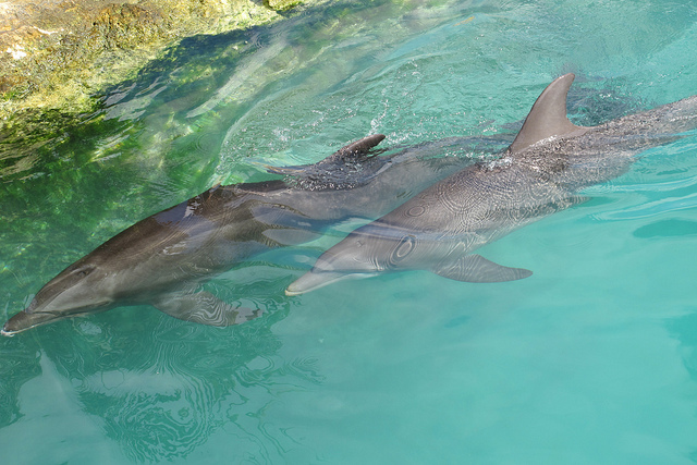 Dolphin Quest Terminates Contract With Dolphinaris Arizona