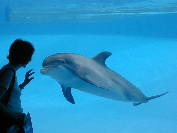 Dolphinaris Arizona Will No Longer House Animals After Deaths of Dolphins