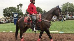 Santa Anita Park Suffers 22nd Horse Death Since December 26, 2018