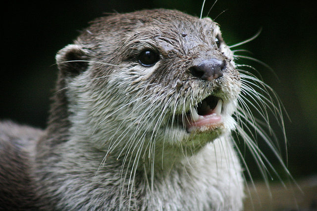 Peaches the Otter Dies at Smithsonian'S National Zoo at Age 7