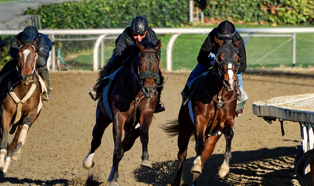Santa Anita Suspends Racing After 21st Horse Dies During Training
