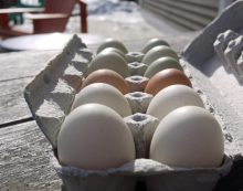 Eggs Are Supposed to Be Healthy for Us, So What Exactly Is the Debate?