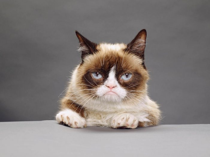 Grumpy Cat Dies at Age 7. The Internet Mourns and Makes Memes