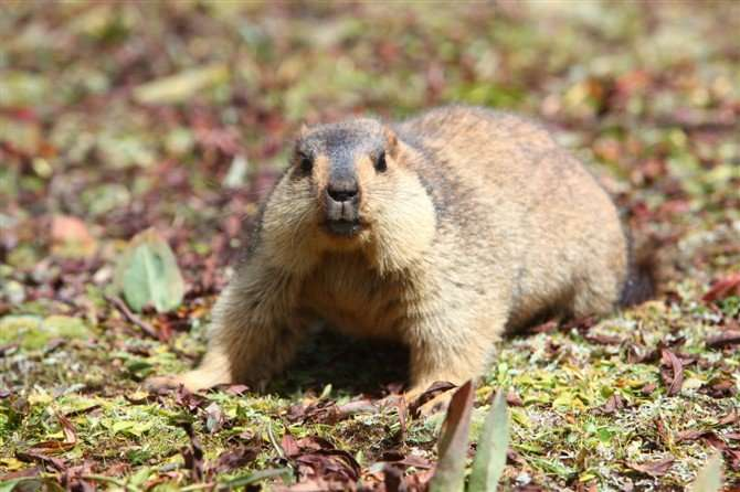 Bubonic Plague Kills Healthy Couple After They Ate Raw Rodent'S Kidney