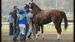 Santa Anita Race Track Kills a 27th Horse and Track Remains Open