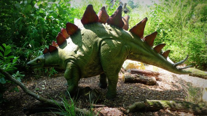 New Type of Stegosaurus Discovered