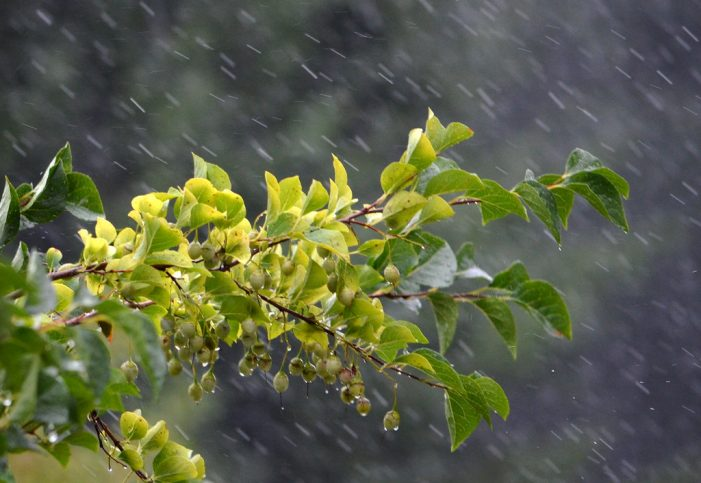Hurricane Kiko Intensifies Rapidly Over the Weekend