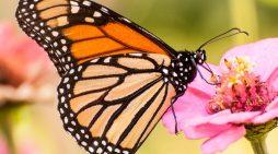 Homero Gómez González, Mexican Defender of Monarch Butterflies Found Dead