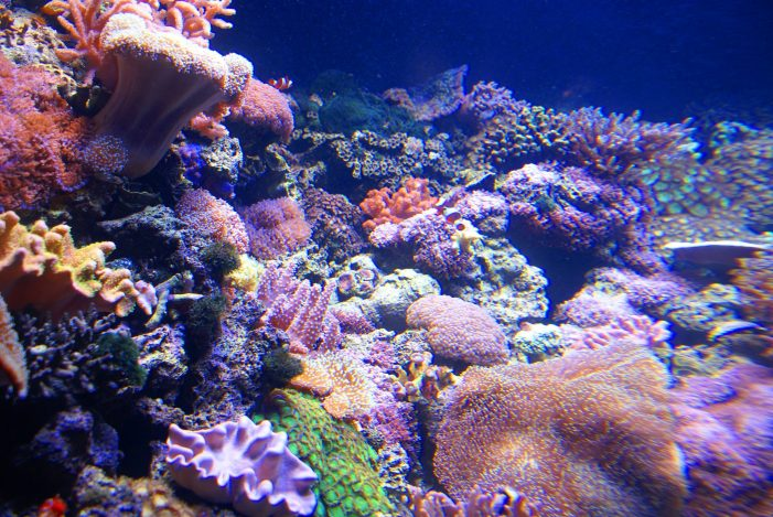 Coral Species Give Birth at Florida Aquarium for the First Time [Video]